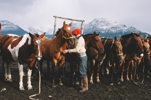 Horses at the Top Ranch Destinations in South America.