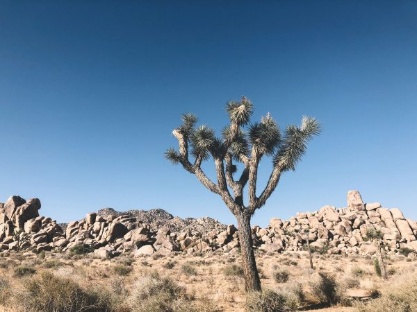 Beautiful Joshua Tree national park