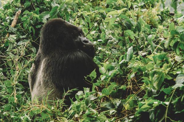 Imbarc Luxury Trip to Rwanda Central Africa